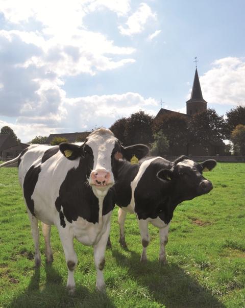 Mitten im Dorf, umgeben von Landwirtschaft, liegt die Kirche.